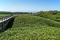 140829_At_Shiretoko_Goko_Lakes_Hokkaido_Japan13s3[1]