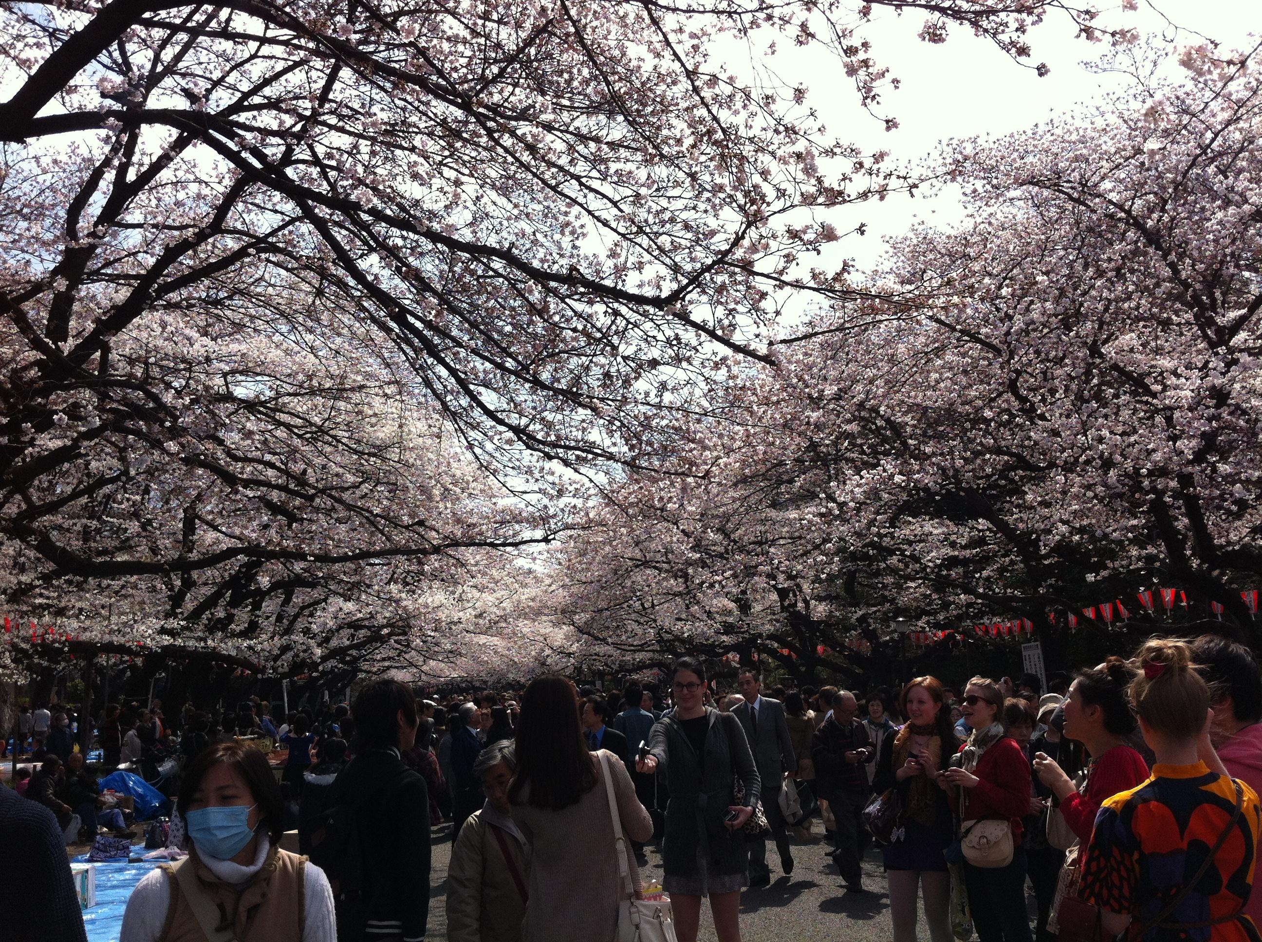 Parco di Ueno.