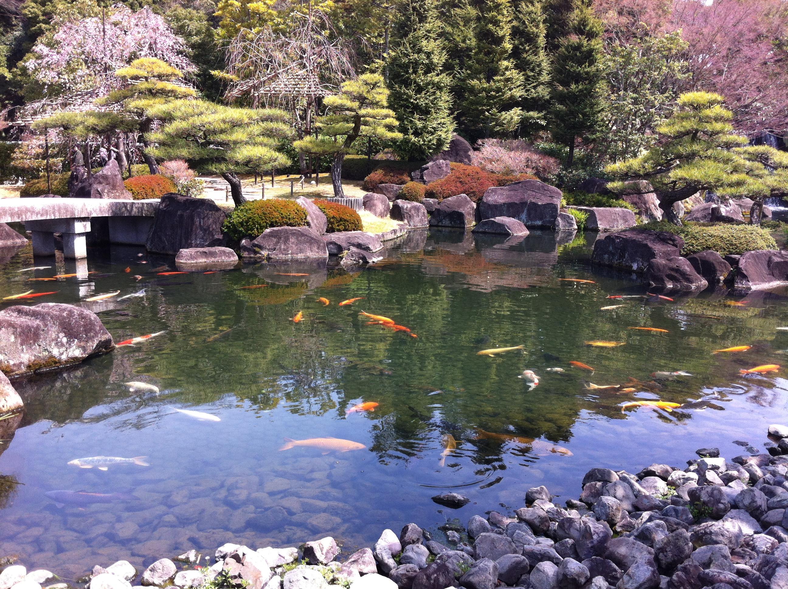 Giardini koko en in primavera mitico giappone for Laghetti nei giardini