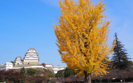 Castello di Himeji 2020